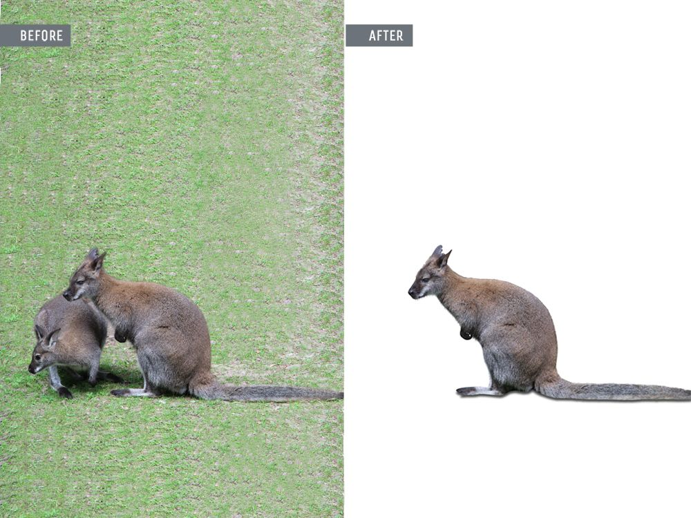 animal photo retouching services