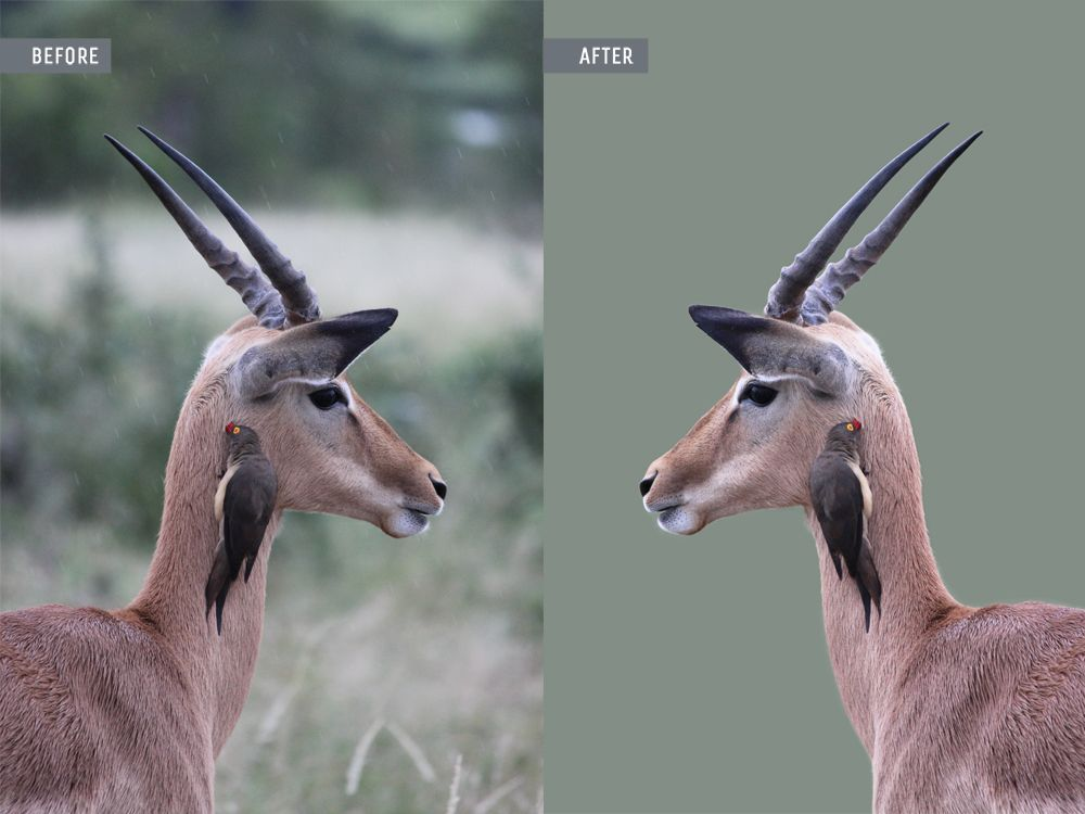 animal photo retouching