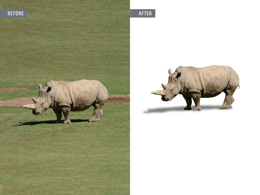 animal photo editing services