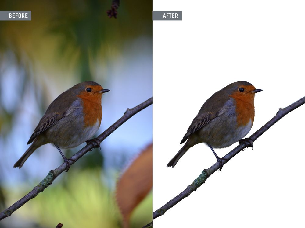 photoshop animal retouching